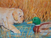Yellow Lab Puppy & Decoy